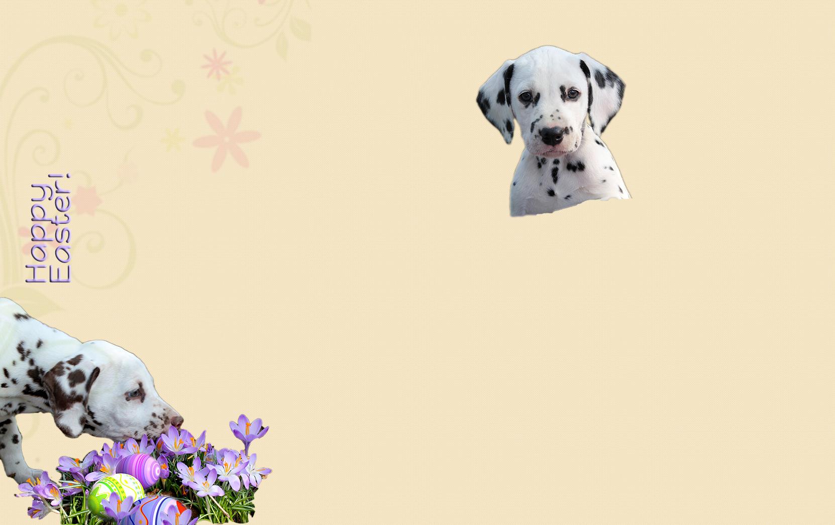 background_gold_easter_en.jpg - 1.71 MB